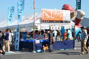 第13回 和歌浦漁港朝市(おっとっと広場)しらすまつり